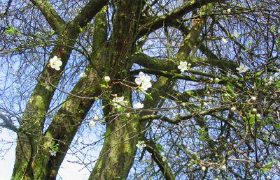 Blossom09
