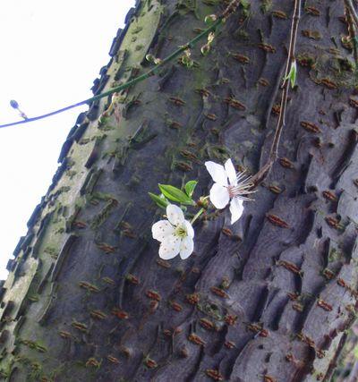 Blossom209