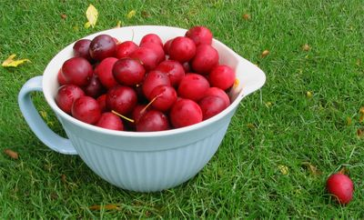 Gathering plums