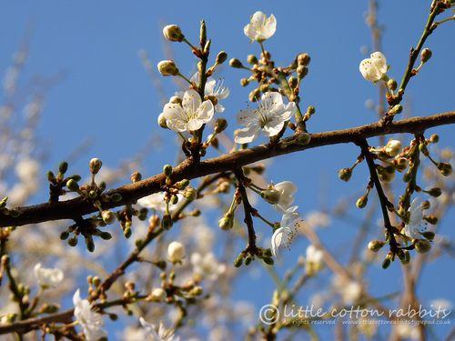 Blosso