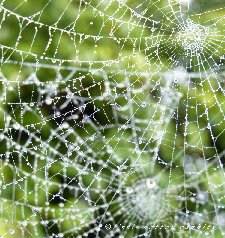 Doubleweb