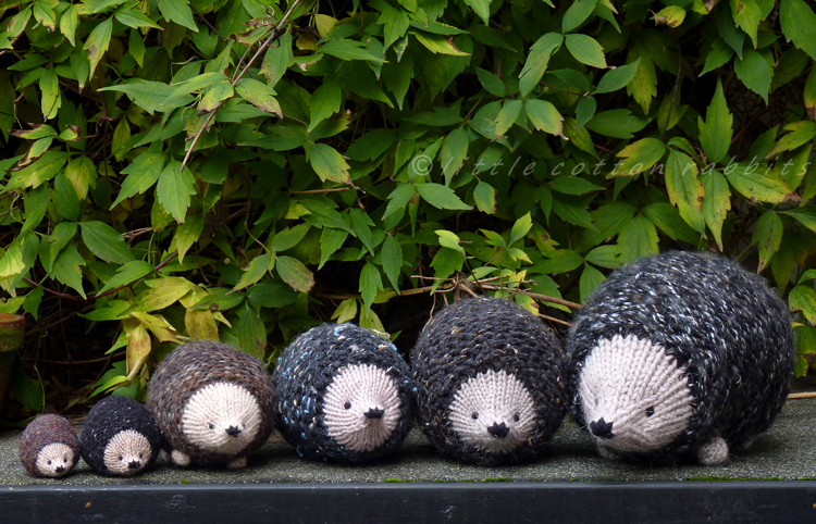 Little Cotton Rabbits A Prickle Of Hedgehogs