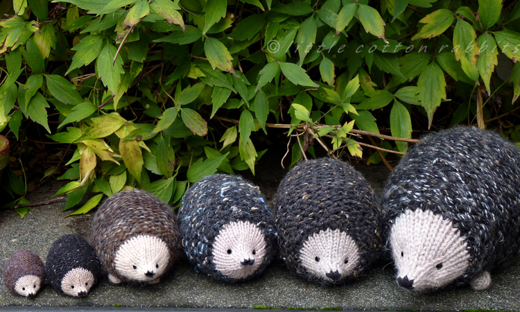 Little Cotton Rabbits: a prickle of hedgehogs