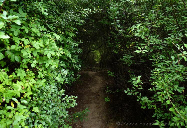 Tunnel - Copy