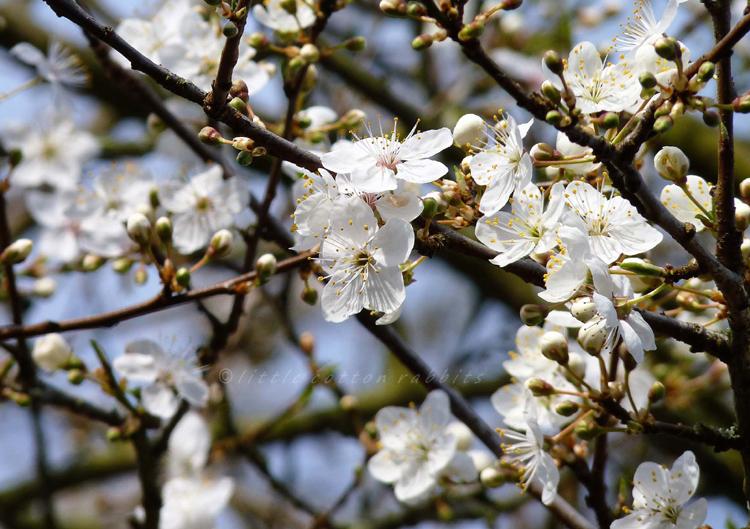 Bloss2