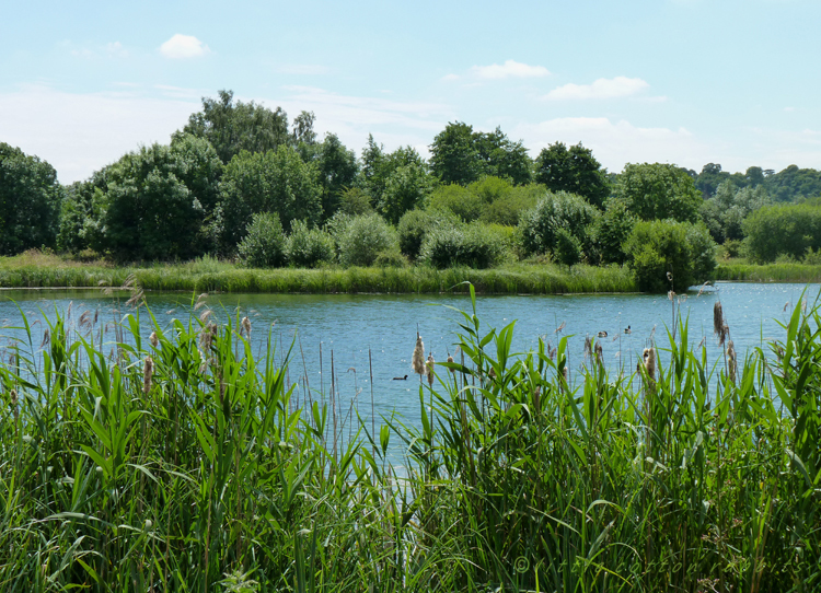 Hollycross lake
