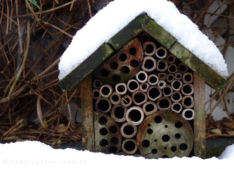 Snowyinsecthouse