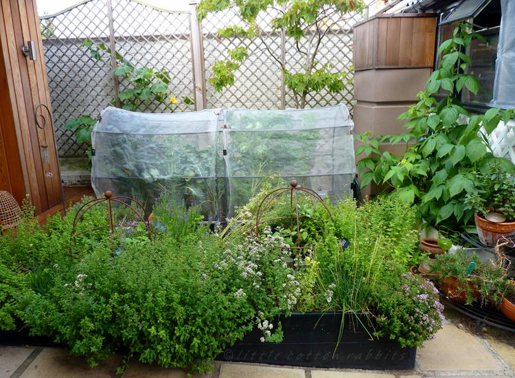 Garden - Copy