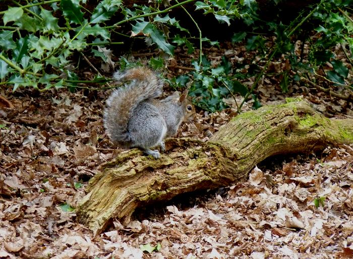 Squirr