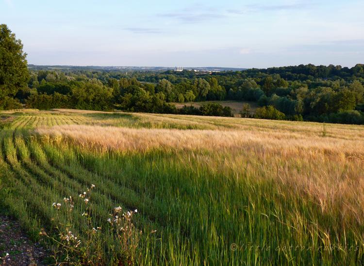 Widbury hill