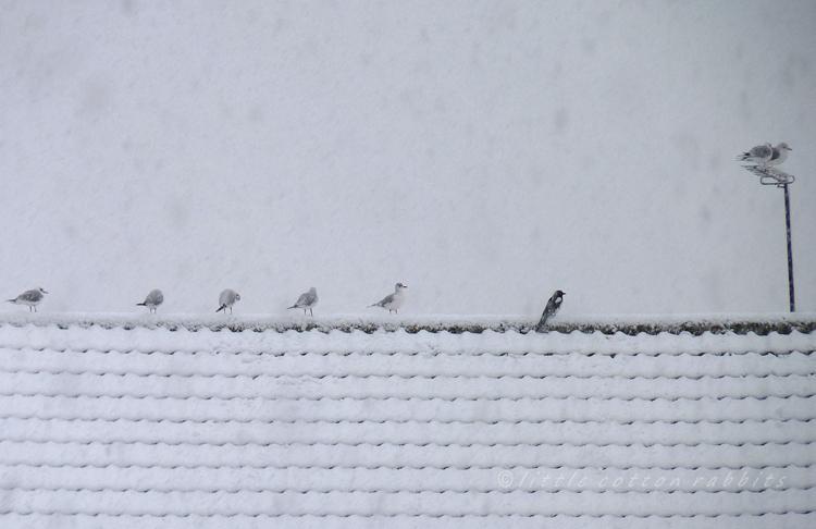 Snowybirds