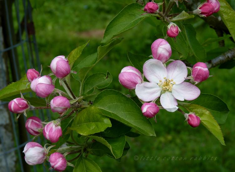 Bloss3