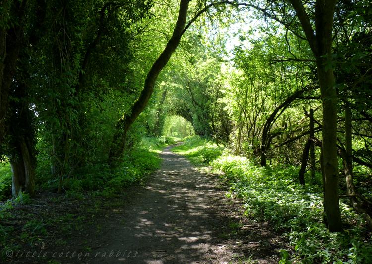 Leafy tunnel2