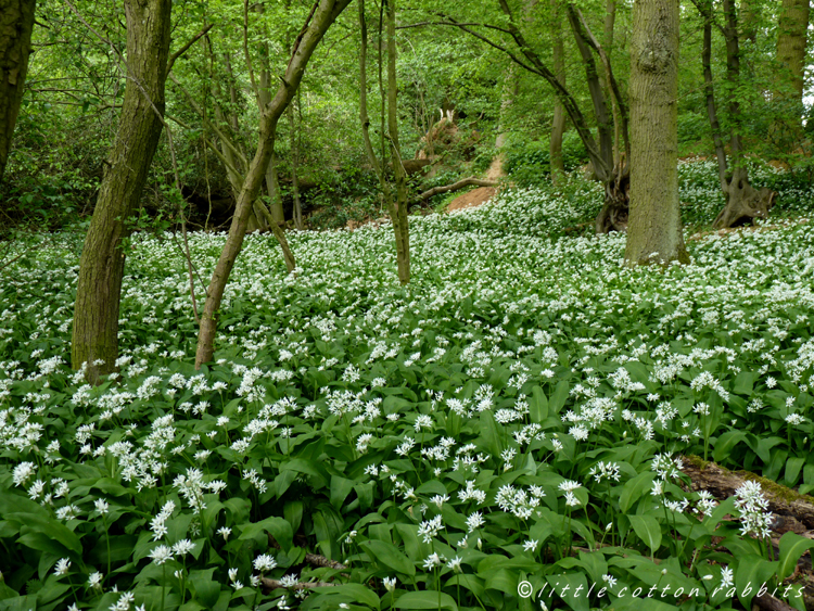 Wildgarlic wood