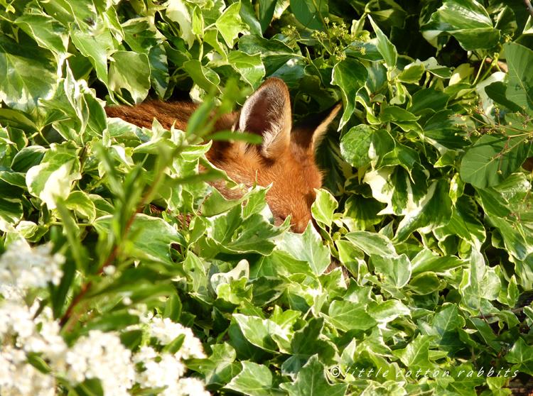 Foxy2