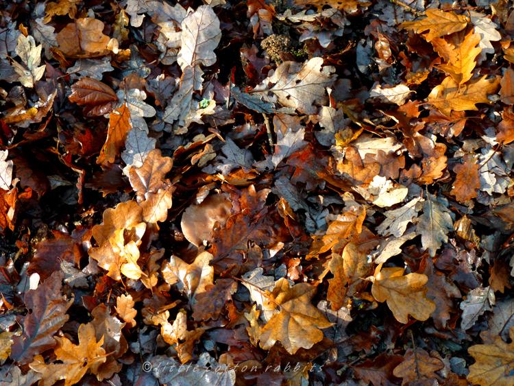 Leaf litter4