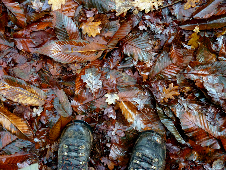 Underfoot leaves