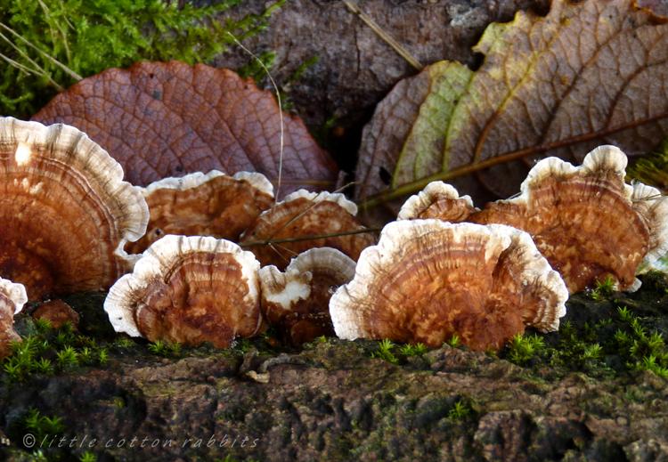 Fungi2
