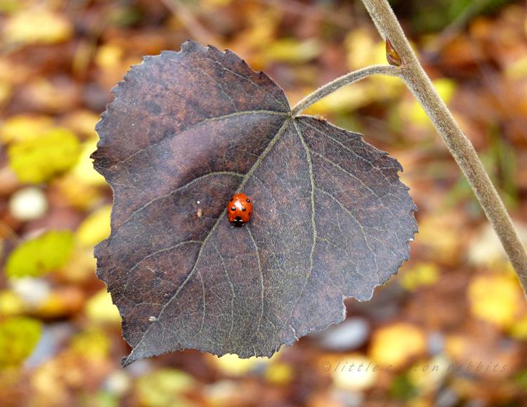Ladybird (2)