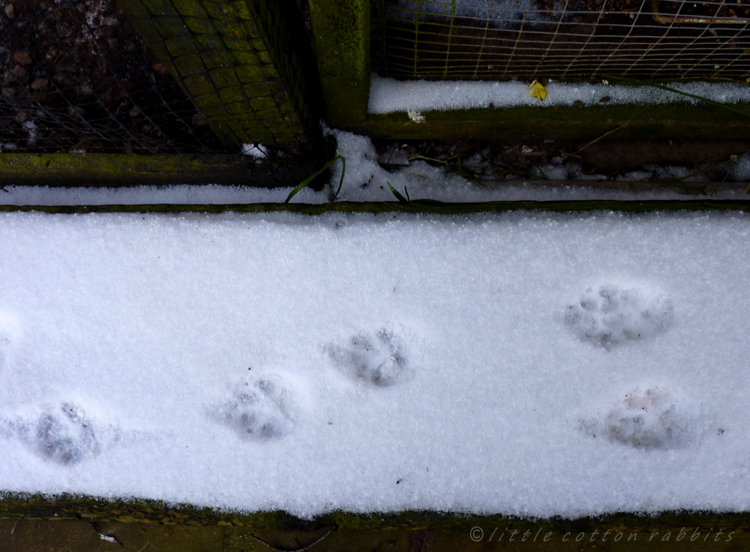 Foxyfootprints