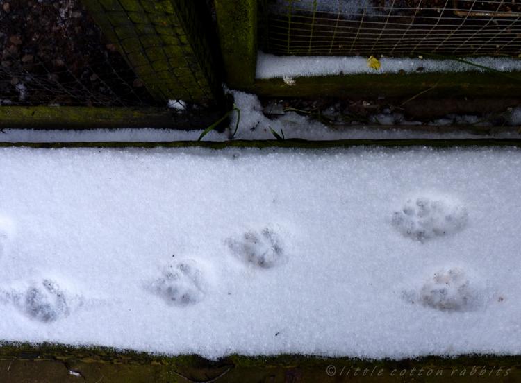 Foxyfootprints