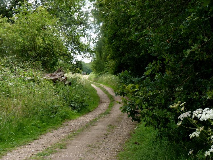 Path6