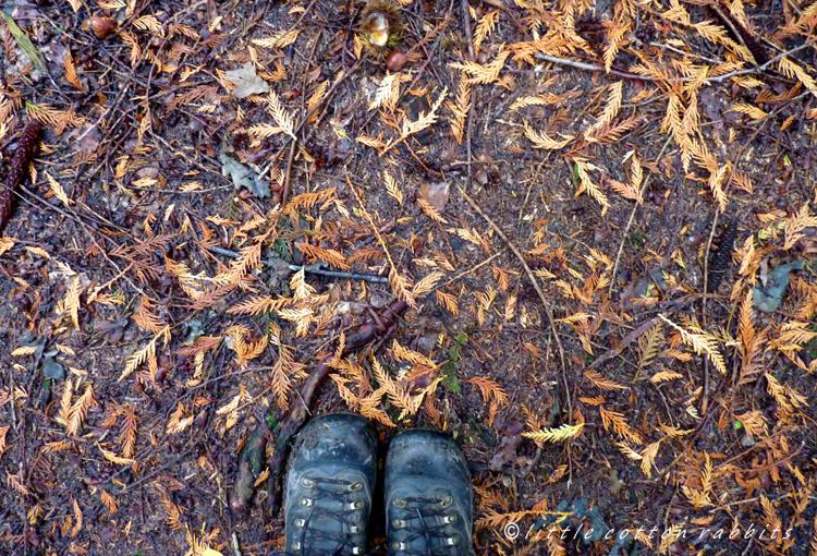 Underfoot under pines