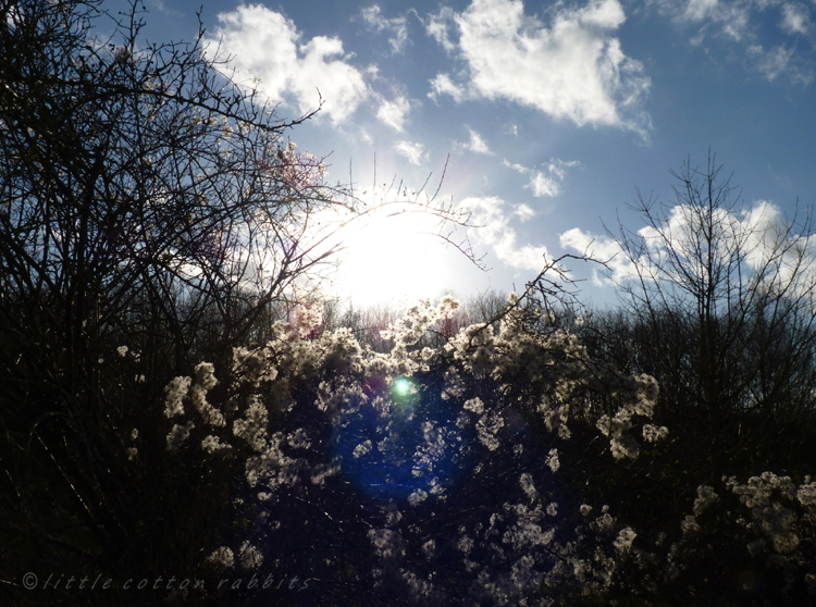 Sun through the hedge