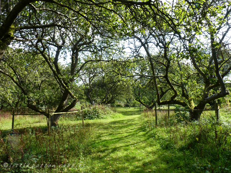 Through the orchard