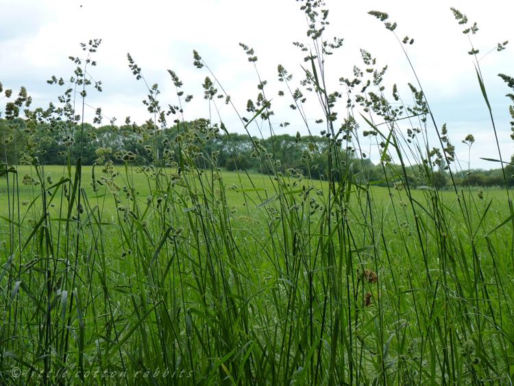 Field margins