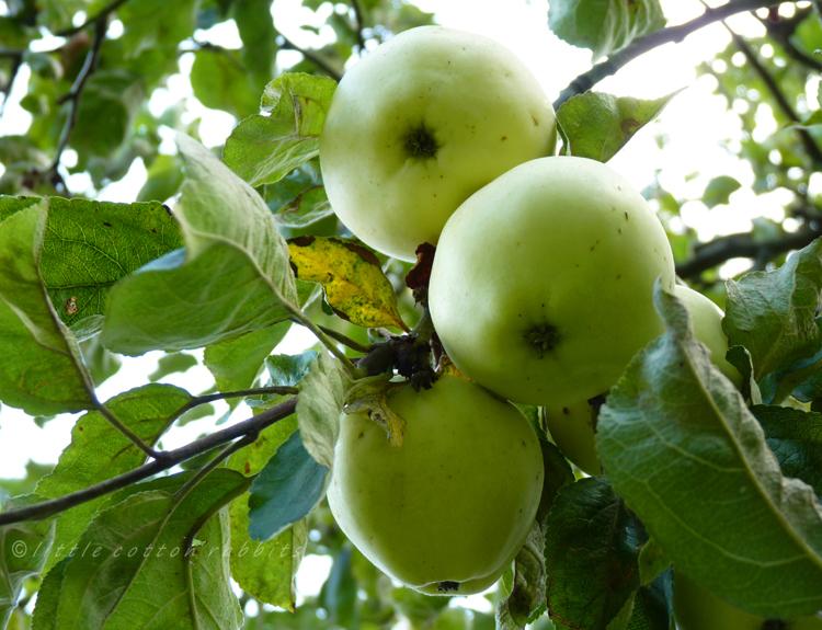 Pale apples