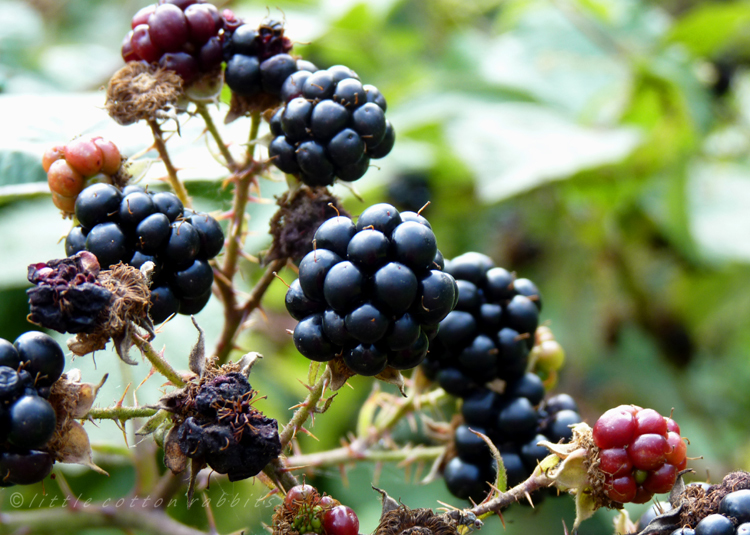 Blackberries 2