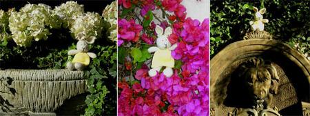 Daffodils_travels_2