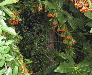 Mistyweb1