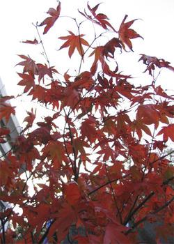 Tree_copy